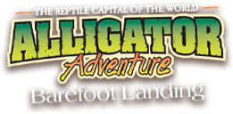 Alligator Adventure - Reptile Capital of the World!