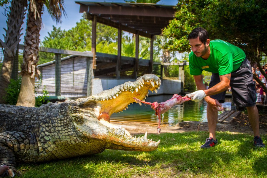 Alligator Adventure Photo Gallery