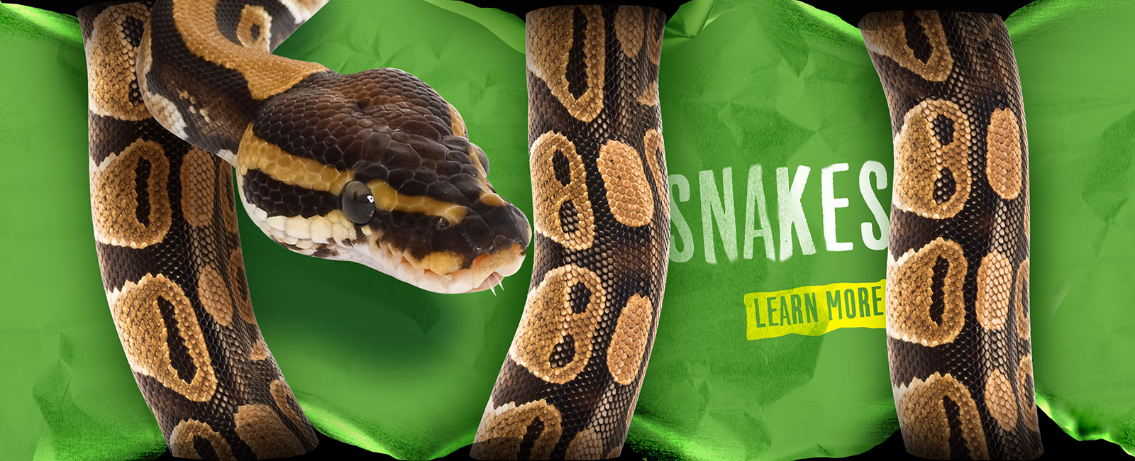Learn about snakes at Alligator Adventure