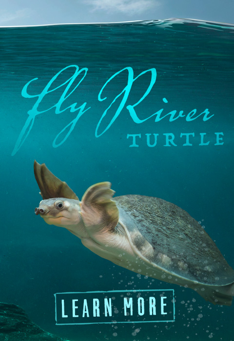 Fly River Turtle exhibit