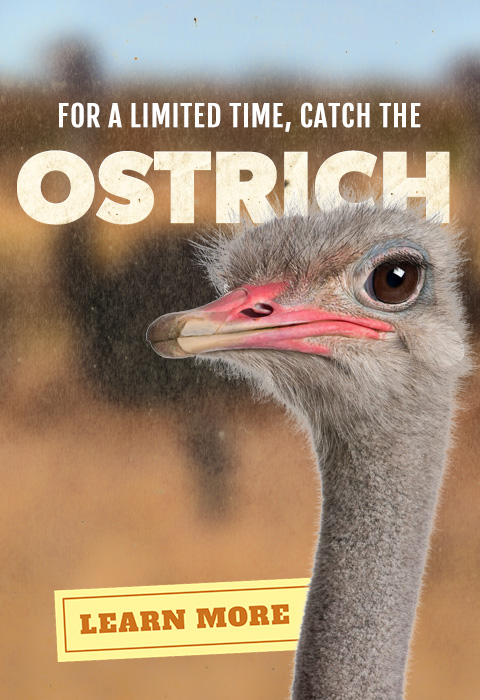 For a limited time catch the Ostrich at Alligator Adventure