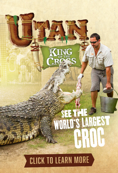 See the world's largest Croc, Utan King of the Crocs.