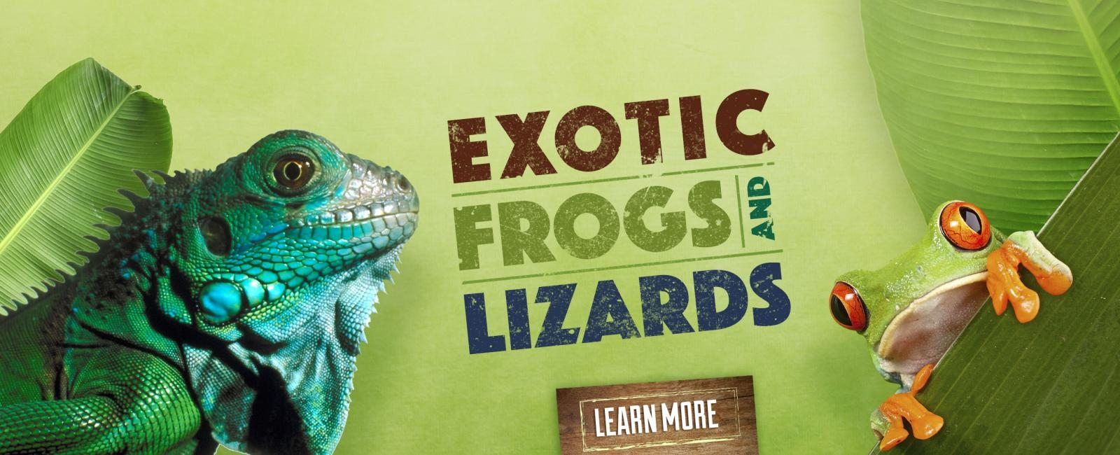 Frogs and Lizards